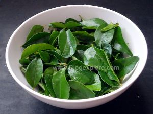 fresh karuveppilai for curry leaves chutney