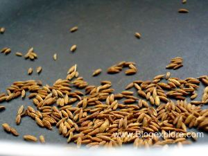 toasting cumin seeds for flax seeds podi